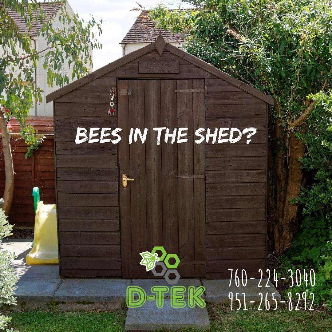 Do You Have Bees In Your Attic Wall Or Water Valve Box Is There A Beehive In A Tree Or Bush On Your Property Contact The Bee Removal Bee Problem Bee