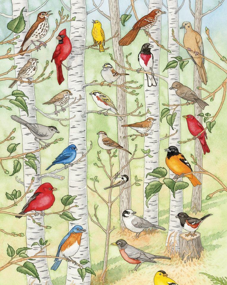 Pin By Sestra Gratia On Spring Adventures Minnesota Birds Bird Poster Wild Birds Unlimited