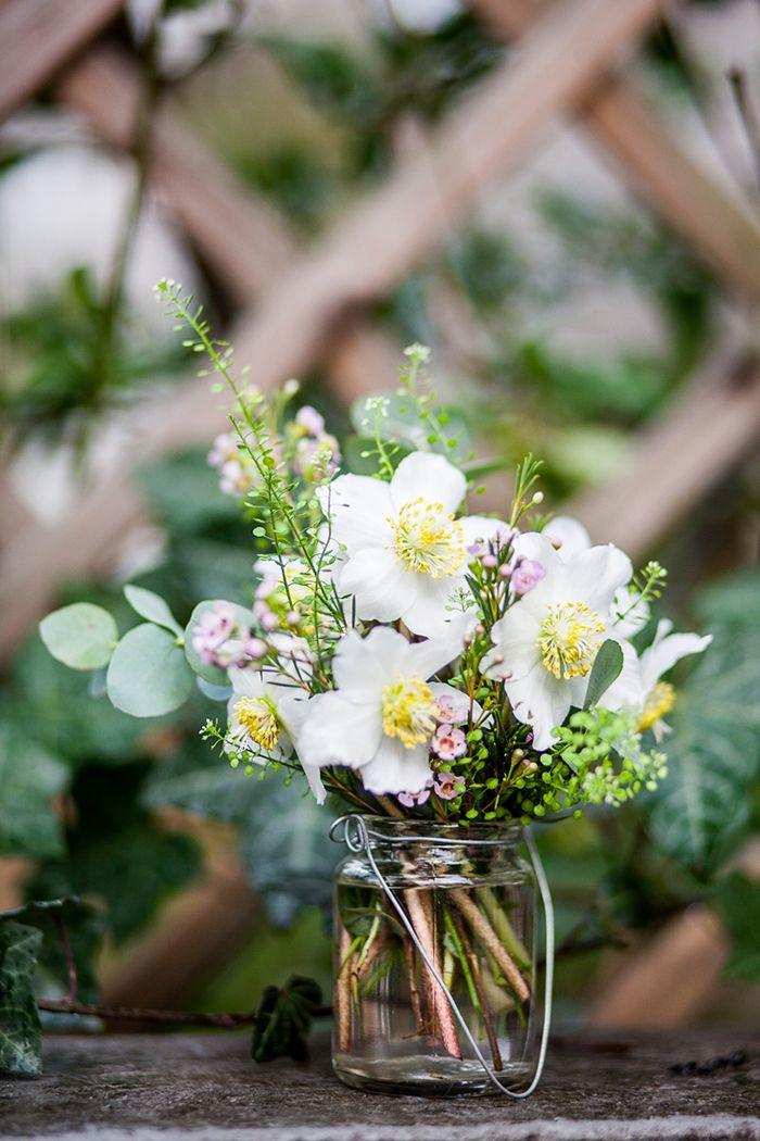 Blume Des Monats Januar Christrose Good Morning Flowers Flowers Good Morning