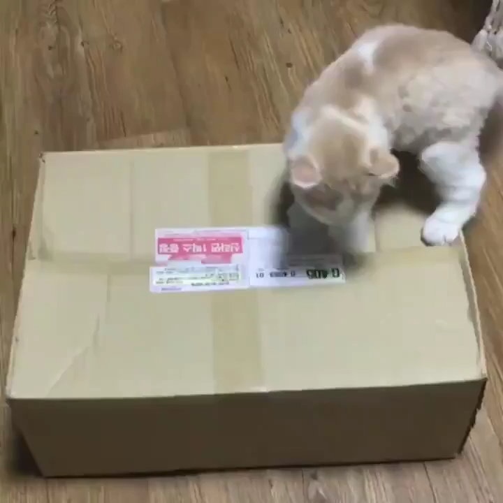 Photo of The box has him now, you'll never see him again.
