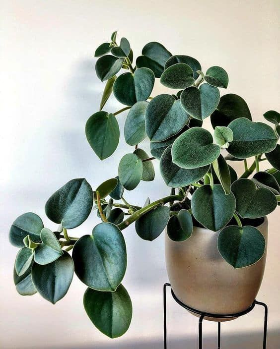 17 plantas de interior resistentes plantas de interior for Plantas de interior resistentes