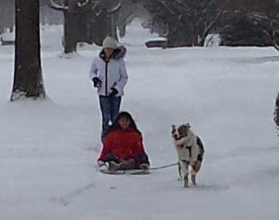 Does anyone know where to get not-too-expensive carts and harnesses for dogs to pull? I had my 2 Aussies pulling sleds this winter, and they loved it.