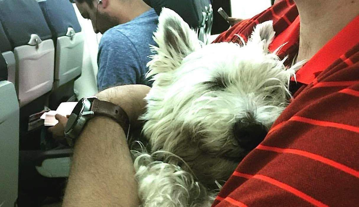 How To Move To Another Country And Bring Your Pet Pets Pet Travel Your Pet