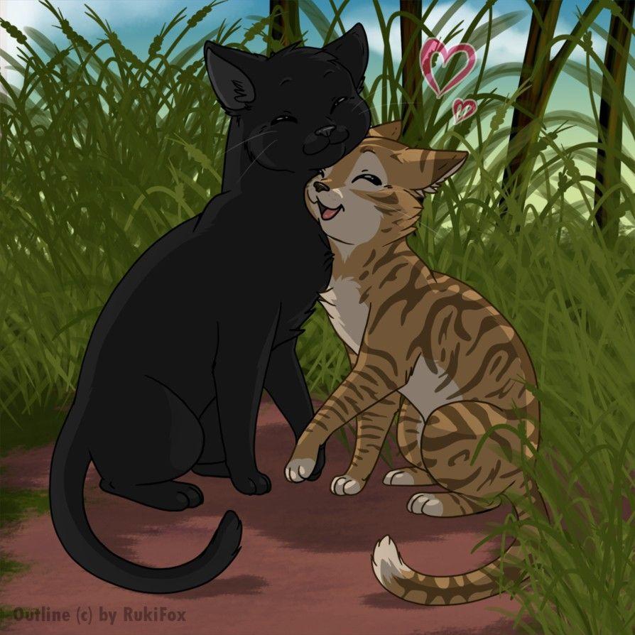 Красивые картинки коты воители пары