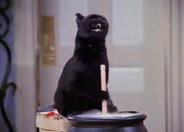 salem the cat gif - Google Search