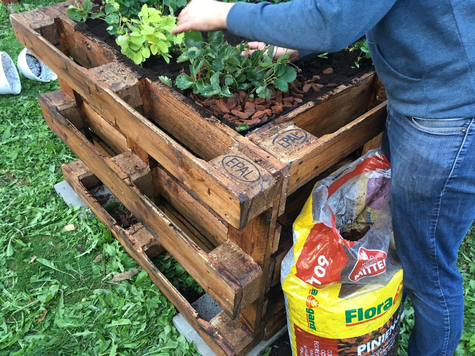 Hochbeet Bepflanzen Fruchtfolge Nutzliche Tipps Hochbeet Pflanzen Hochbeet Bepflanzen Und Pflanzplan
