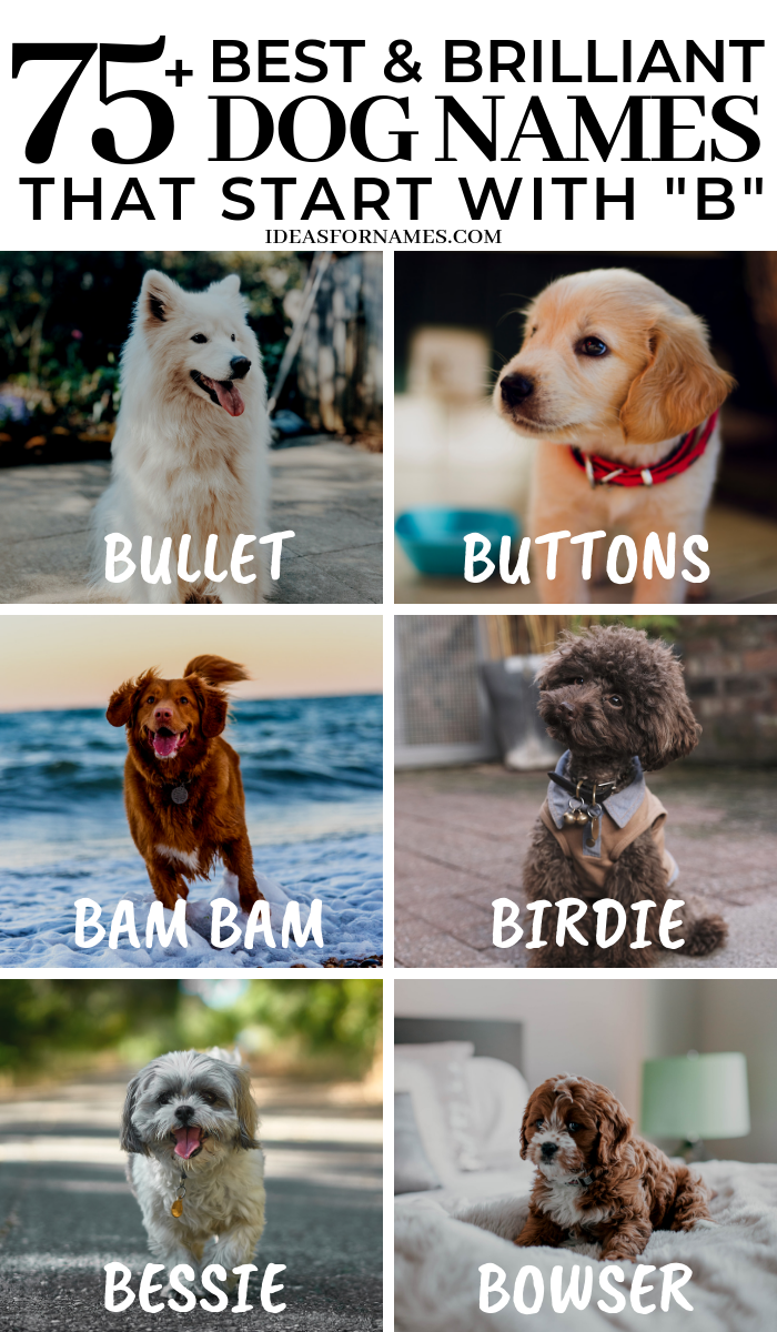 50 Best And Brilliant Dog Names That Start With B Letter B Name For New Puppy Dog Dogs Doglover Dognames Girl Dog Names Dog Names Cute Names For Dogs