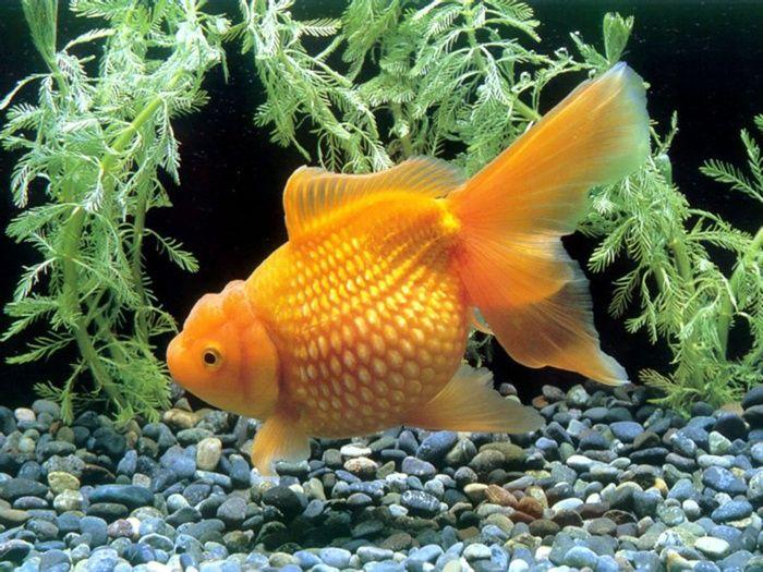 10 Best Freshwater Aquarium Fishes For Beginners Freshwater