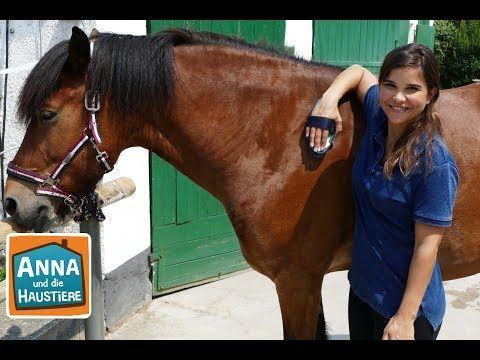 Anna Lernt Reiten 1 Die Erste Reitstunde Anna Und Die Haustiere Youtube Reiten Haustiere Wilde Tiere