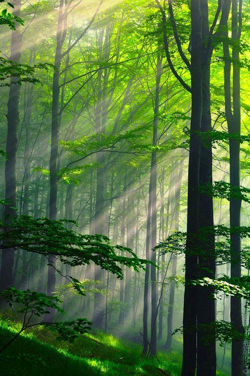 ✮ Summer Forest, Bulgaria