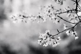 Resultado De Imagem Para Black And White Photography Flowers
