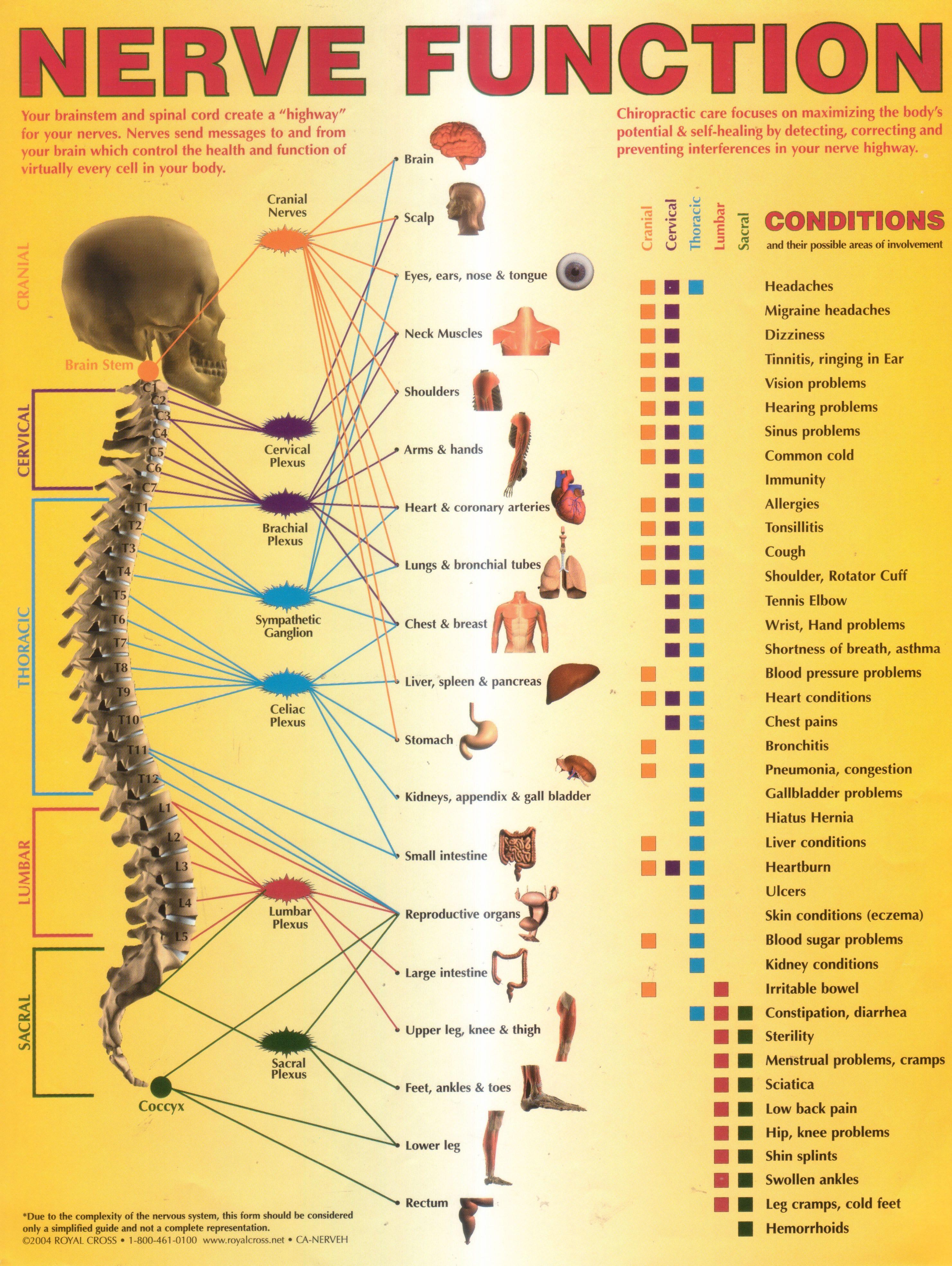 Lower Back Nerves Diagram