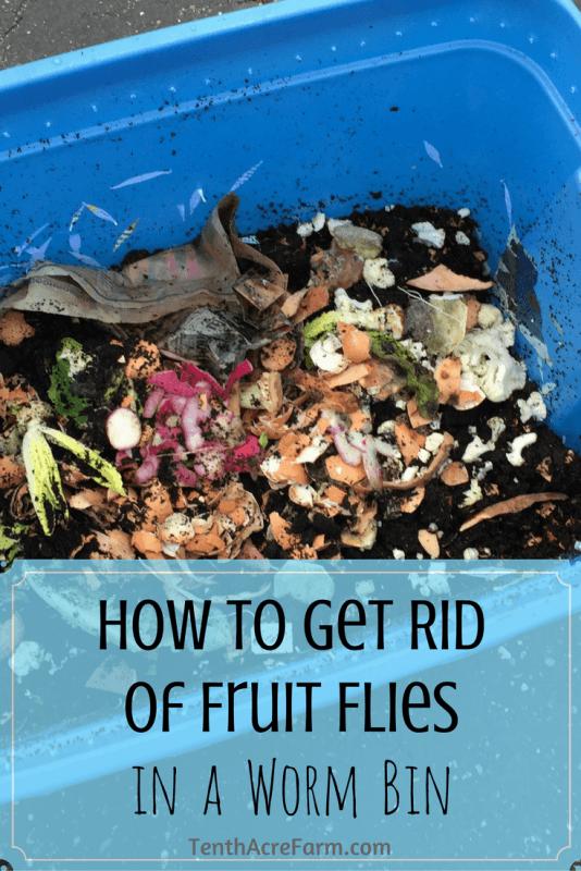 How To Get Rid Of Flies In Compost Bin
