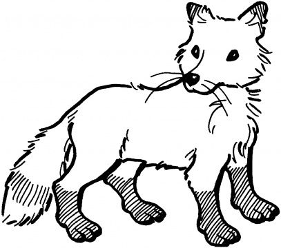 Red Fox Coloring Pages Super Coloring Fox Coloring Page Animal Coloring Pages Coloring Pages