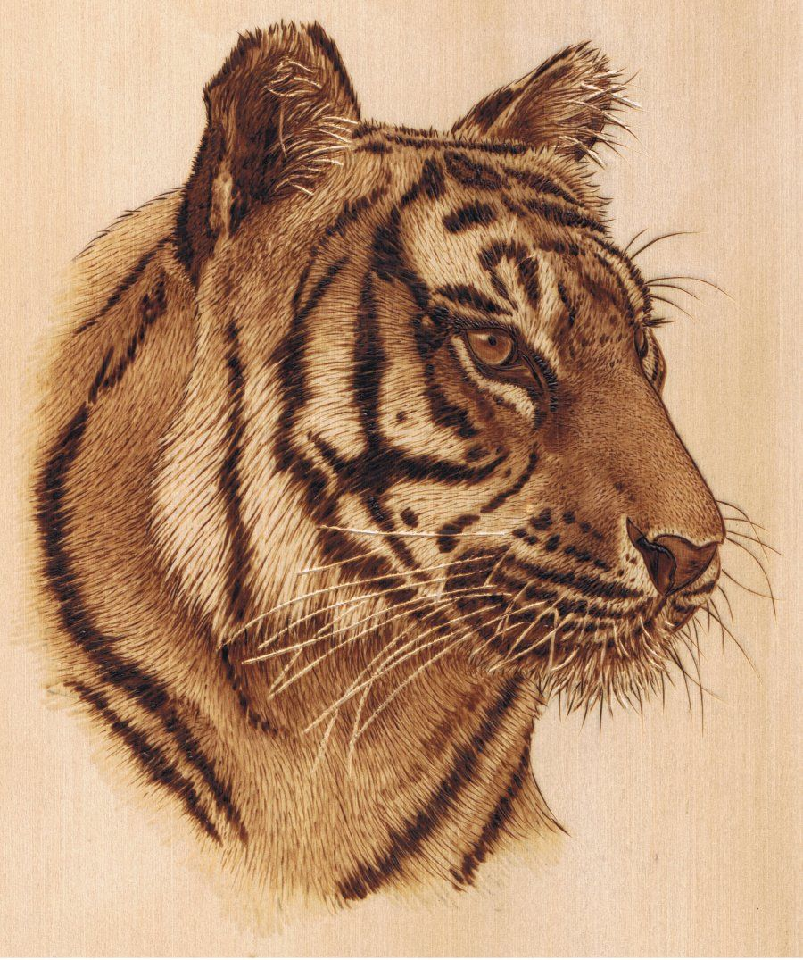Sue walters tiger lesson kit pyrography woodburning for Pyrography templates free