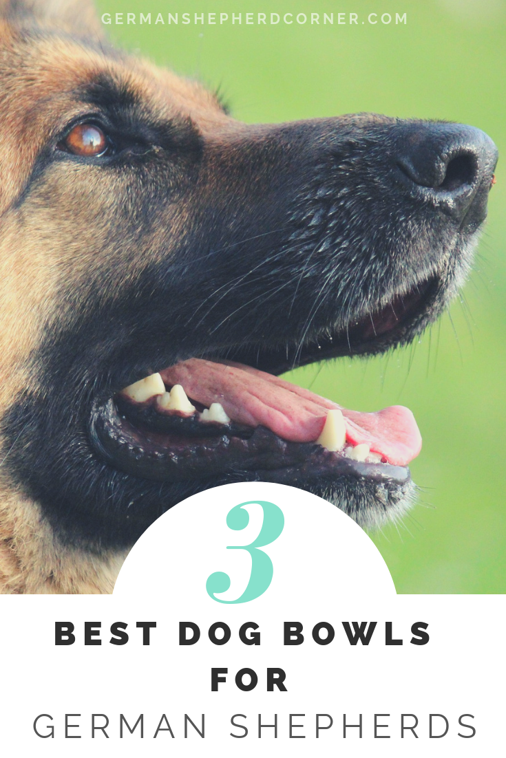 3 of the Best Dog Bowls for German Shepherds Best dogs