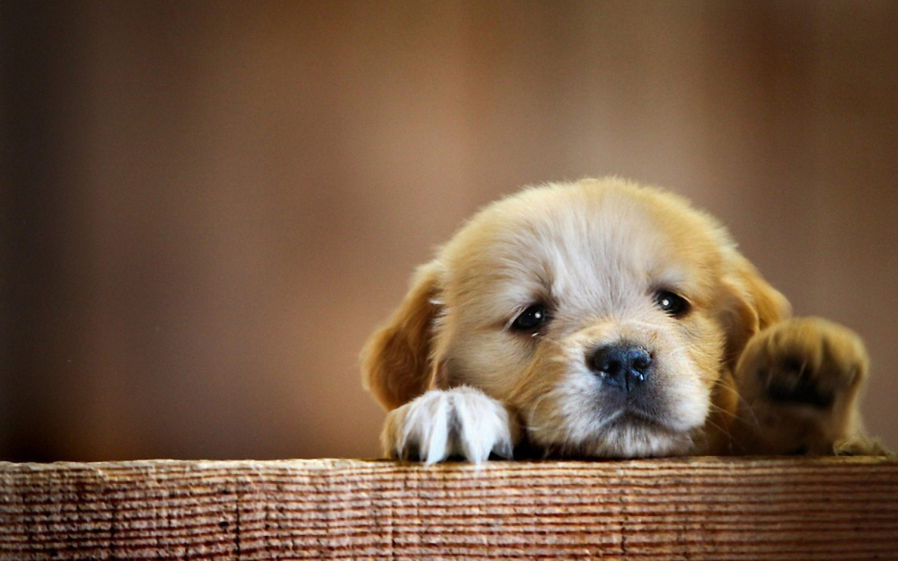 Beautiful Hd Dog Wallpaper For Iphone Lovers Cute Dog Wallpaper Dog Wallpaper Iphone Cute Puppy Wallpaper
