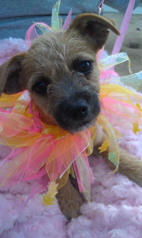Adopt Odette On Dog Adoption Cute Animals Puppy Adoption