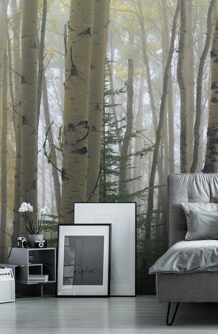 Stunning Foggy Aspen Forest Near Ester Interior wall mural