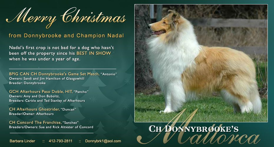 Ch Donnybrooke S Mallorca Collie Dogs