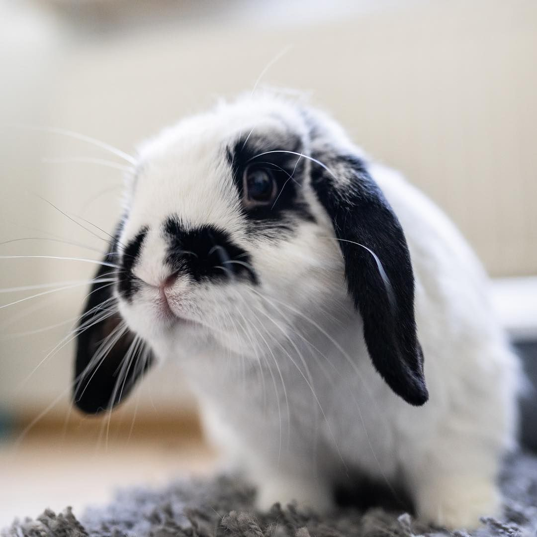 Happy Whisker Wednesday Everybun Ig Lifeofmill Cheap Bunny Cages Cute Baby Bunnies Pet Rabbit Toys