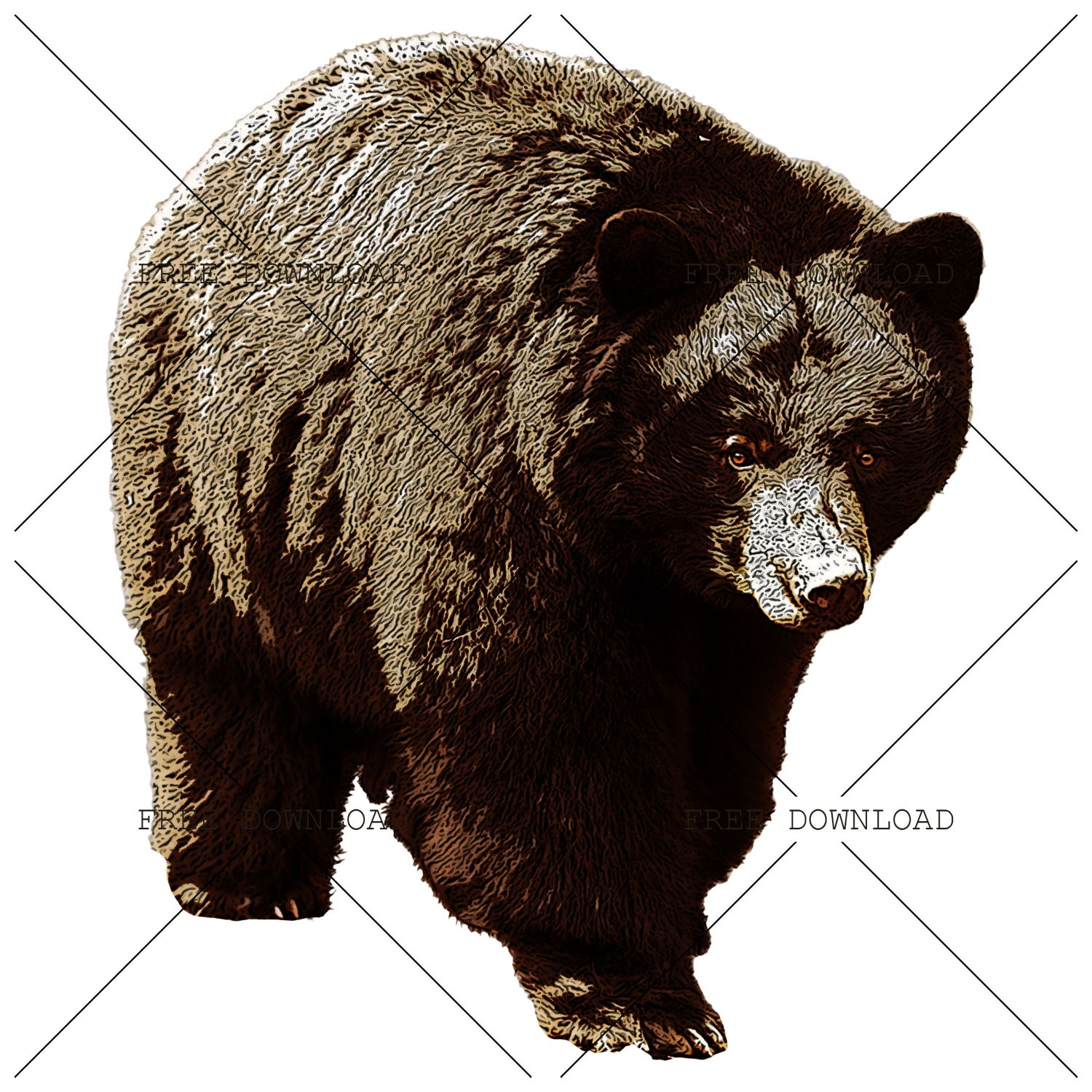 Bear Png Image With Transparent Background Stock Images Free Png Images Png Photo