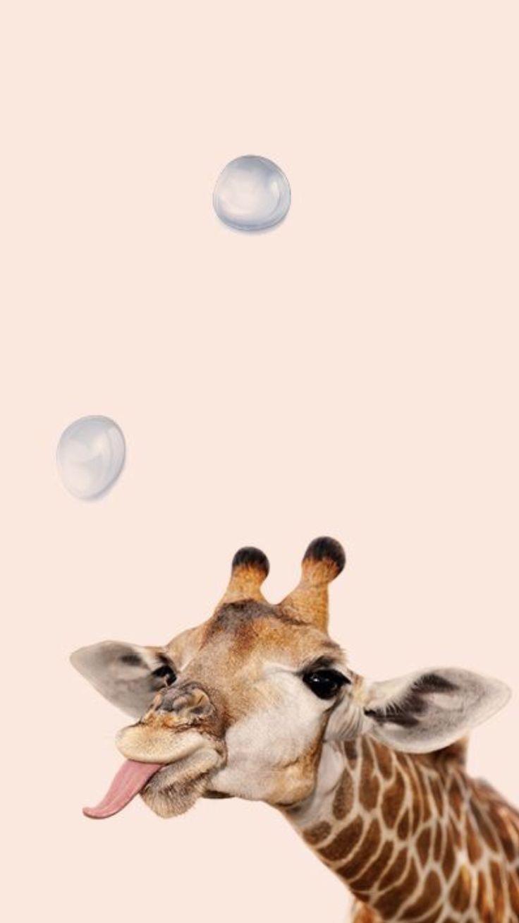 Photo of Verspielte Giraffe mit Bubble Wallpaper – Tiere – #Tiere #Giraffe #Luft …   #animalwallpape…