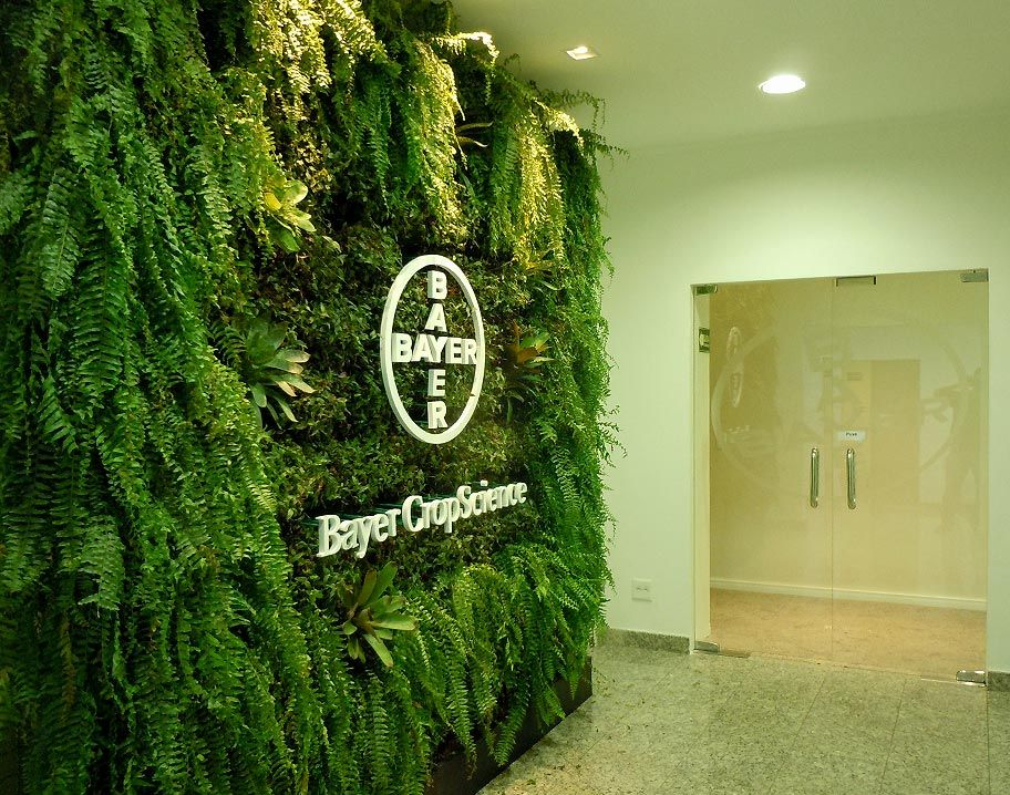 logo sobre parede verde - samambaia americana para ambientes internos