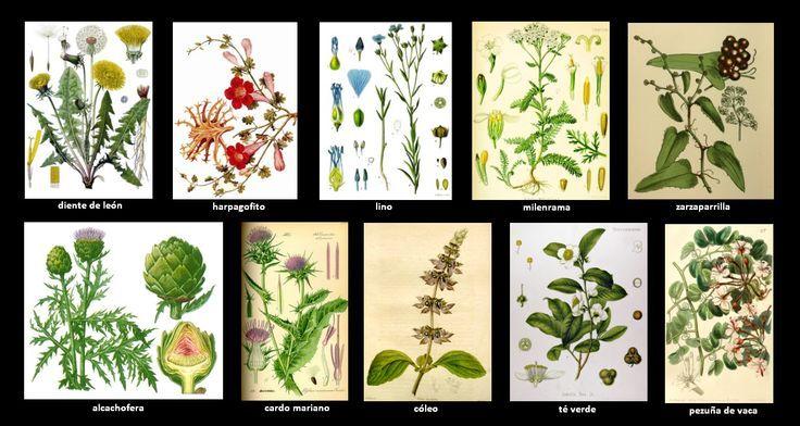 Abc De Las Plantas Medicinales Con Imagenes Plantas