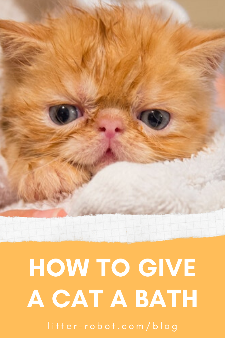 How To Give A Cat A Bath In 2020 Cats Litter Robot Cat Shampoo