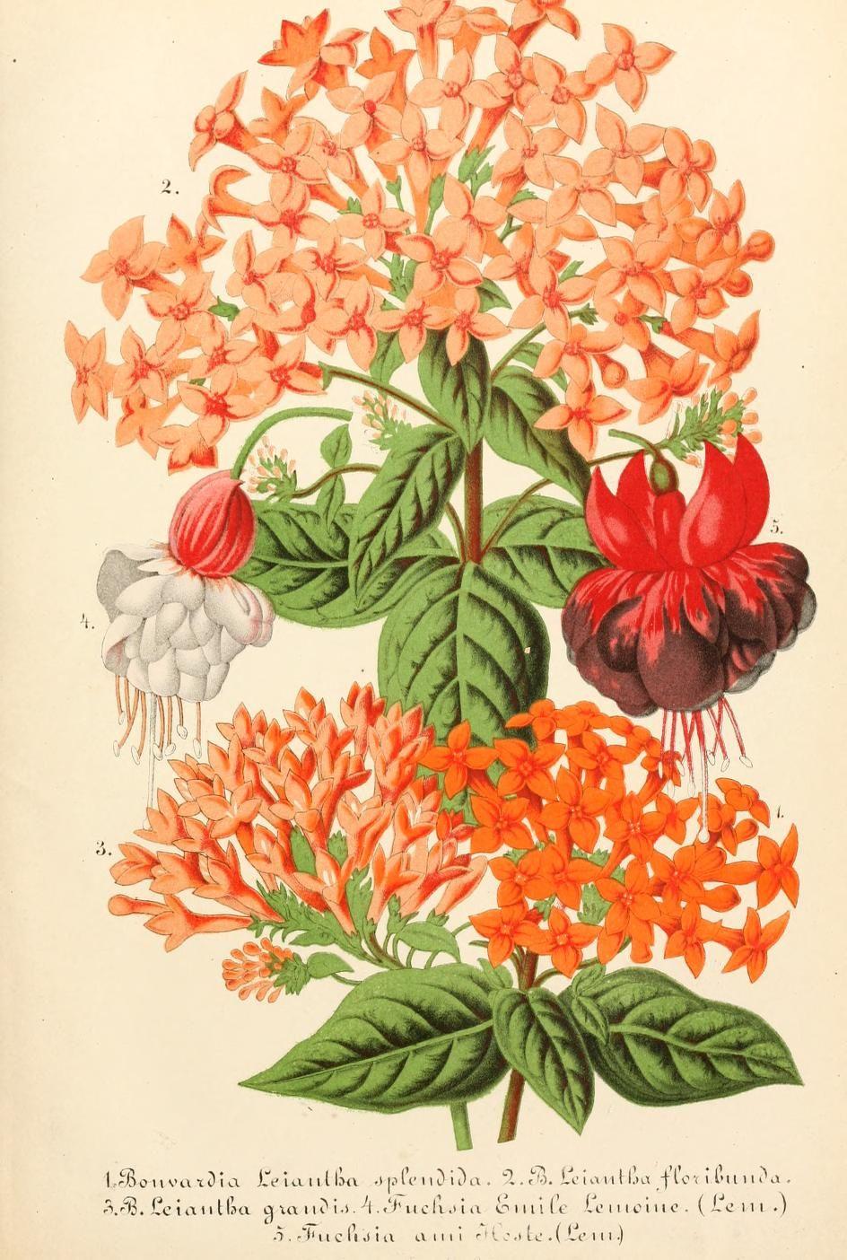 Bd 9 1865 Illustrierte Garten Zeitung Biodiversity Heritage Library Botanical Prints Fauna Illustration Botanical Illustration