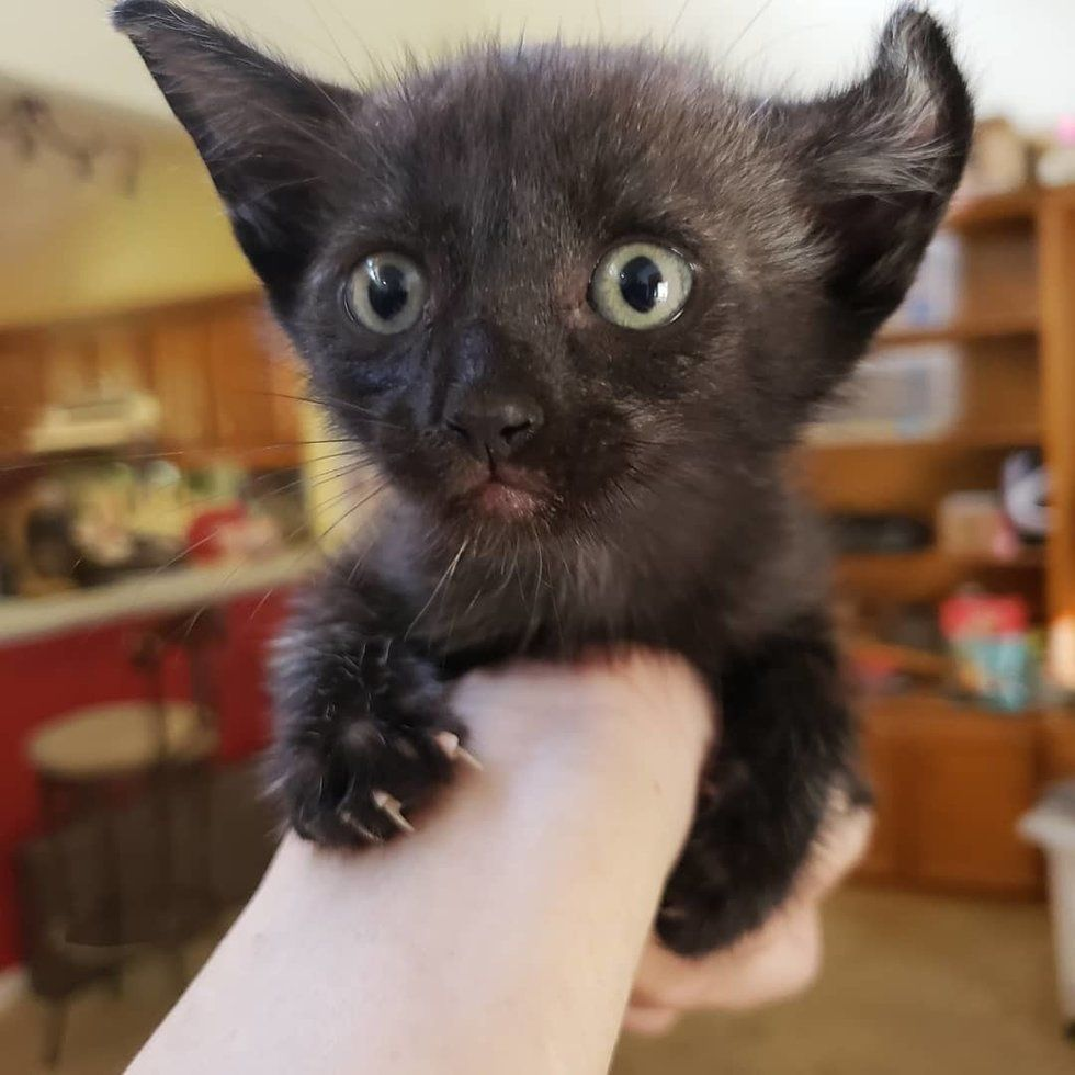 Woman Saves Kitten From Car Engine And Brings Him Back From The Brink The Kitty Can T Stop Cuddling Love Meow Kitten Baby Kittens Cuddling