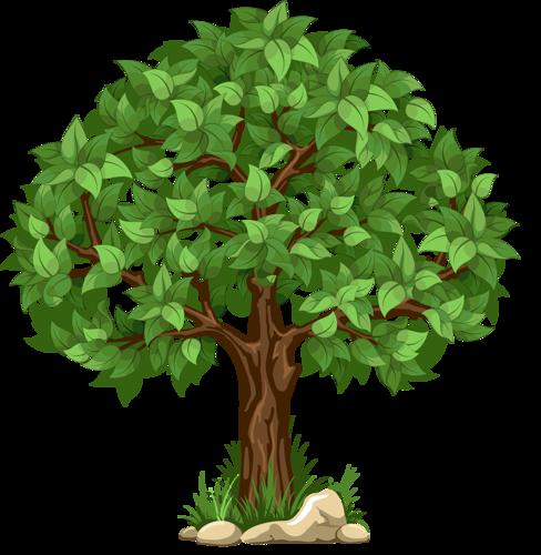 разные деревья и кустарники Tree árboles Pinterest Tree