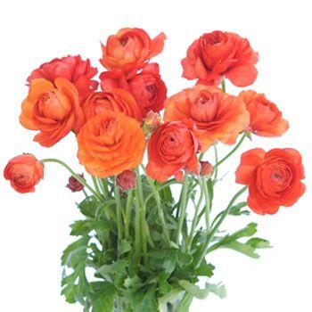 Tomato Red Ranunculus Flowers Ranunculus Wedding Bouquet Orange Ranunculus
