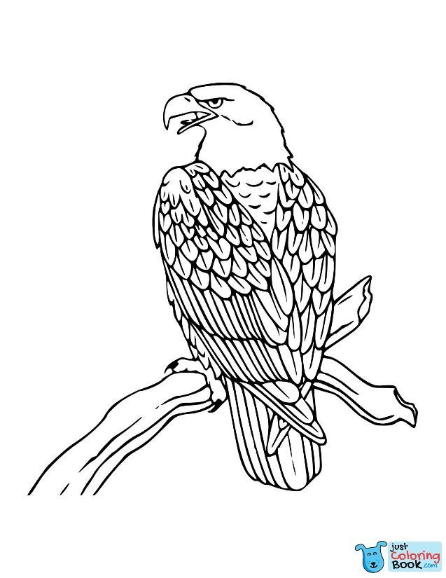 free printable bald eagle coloring pages for kids eagles