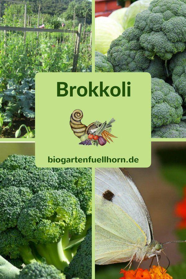 So gelingt der Anbau von Brokkoli #howtogrowvegetables