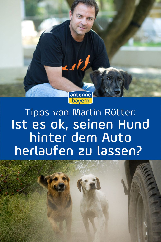 Martin Rutter Live Bei Antenne Bayern Die Antworten Zum Nachhoren Hunde Hundehaltung Und Hundeerziehung