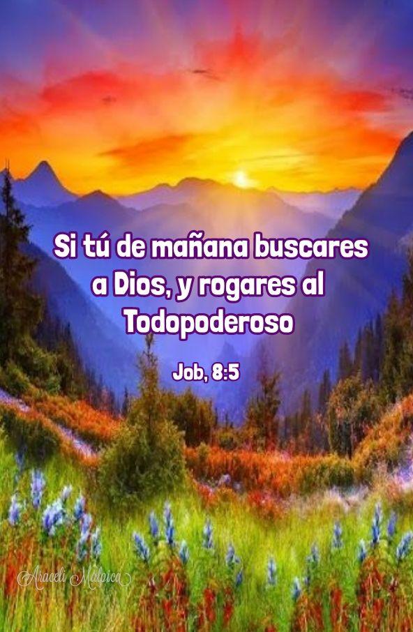 Job 8 5 Si Tú De Mañana Buscares A Dios Y Rogares Al
