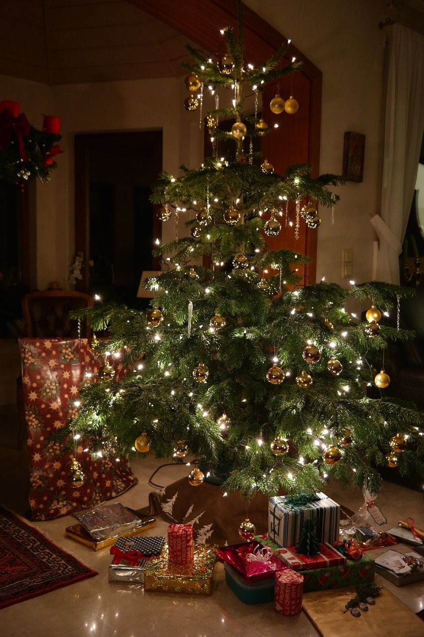 Caring for a Live Christmas TreeBloomingSecrets