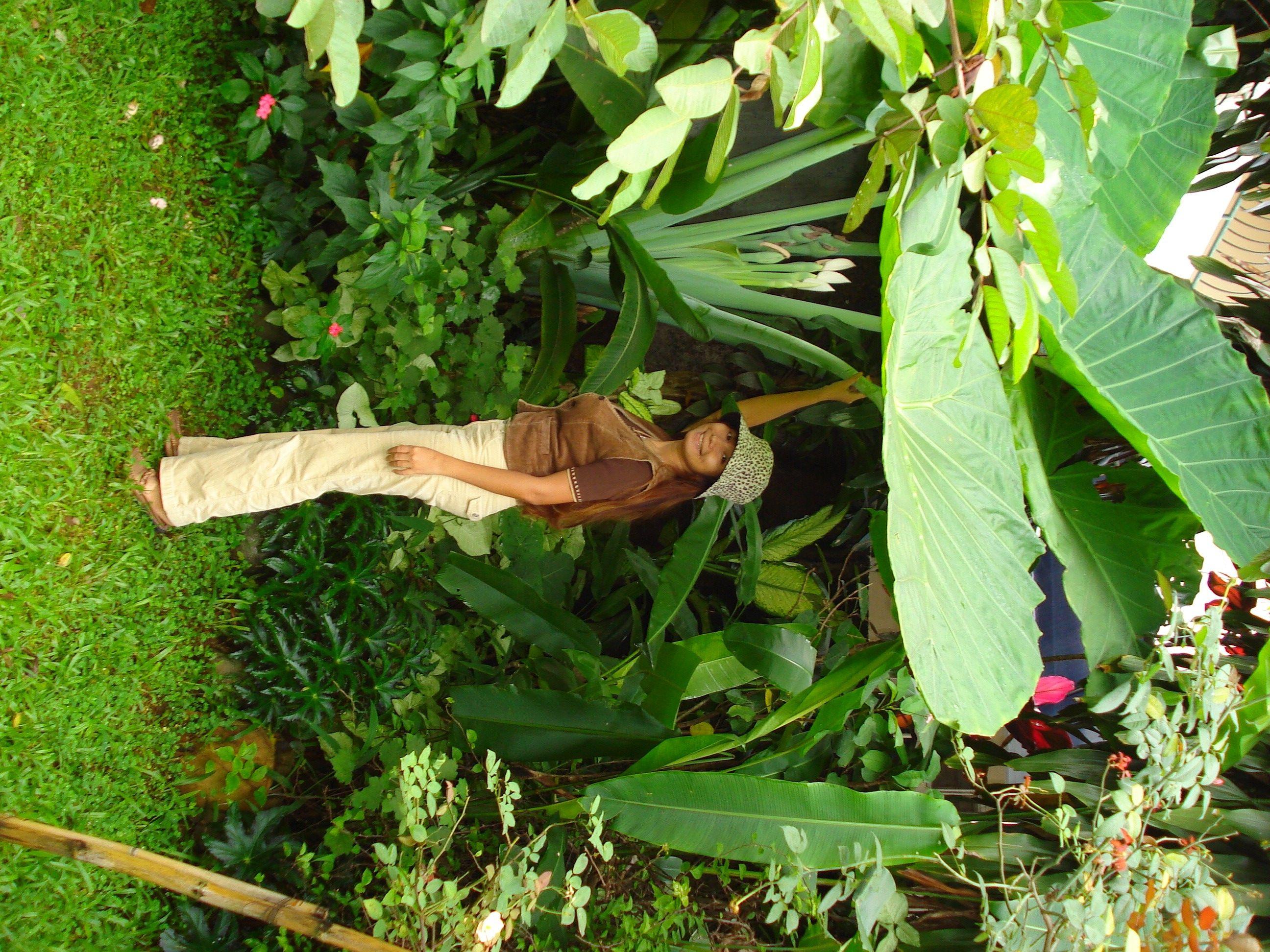 Lilliputian with a super size elephant ear colocasia for Planta ornamental oreja de elefante