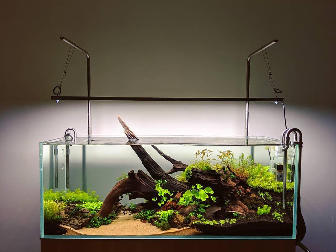 All Credit To Litiaquaria On Instagram As The Owner Of This Content With Images Aquascape Aquarium Aquarium Design Aquarium Fish