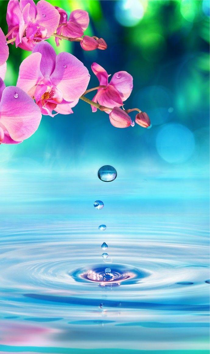 Organic Bath Products | Smell My Balls | United States