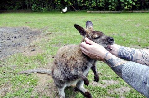 The Outback A Kangaroo Farm In Seattle S Backyard Kangaroo Outback Weird Animals