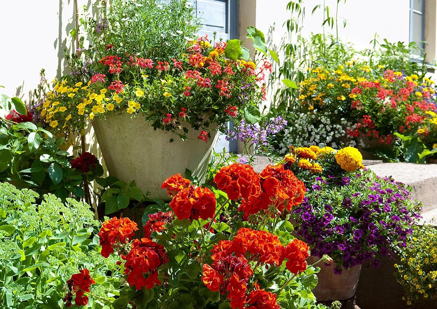 Monet lämpöä vaativat ja värikkäät kesäkukat viihtyvät mainiosti juuri ruukuissa. Lue vinkit värikkään ruukkupuutarhan kasvivalintoihin Viherpihasta!