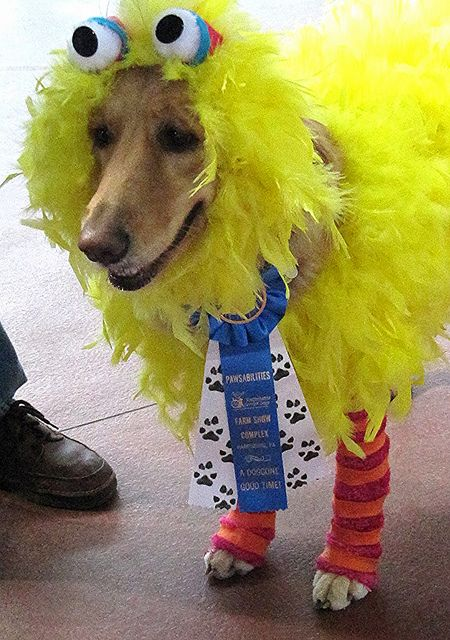 Big Birddog Won First Prize In The Costume Contest Pet