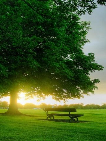 Image result for trees and park bench