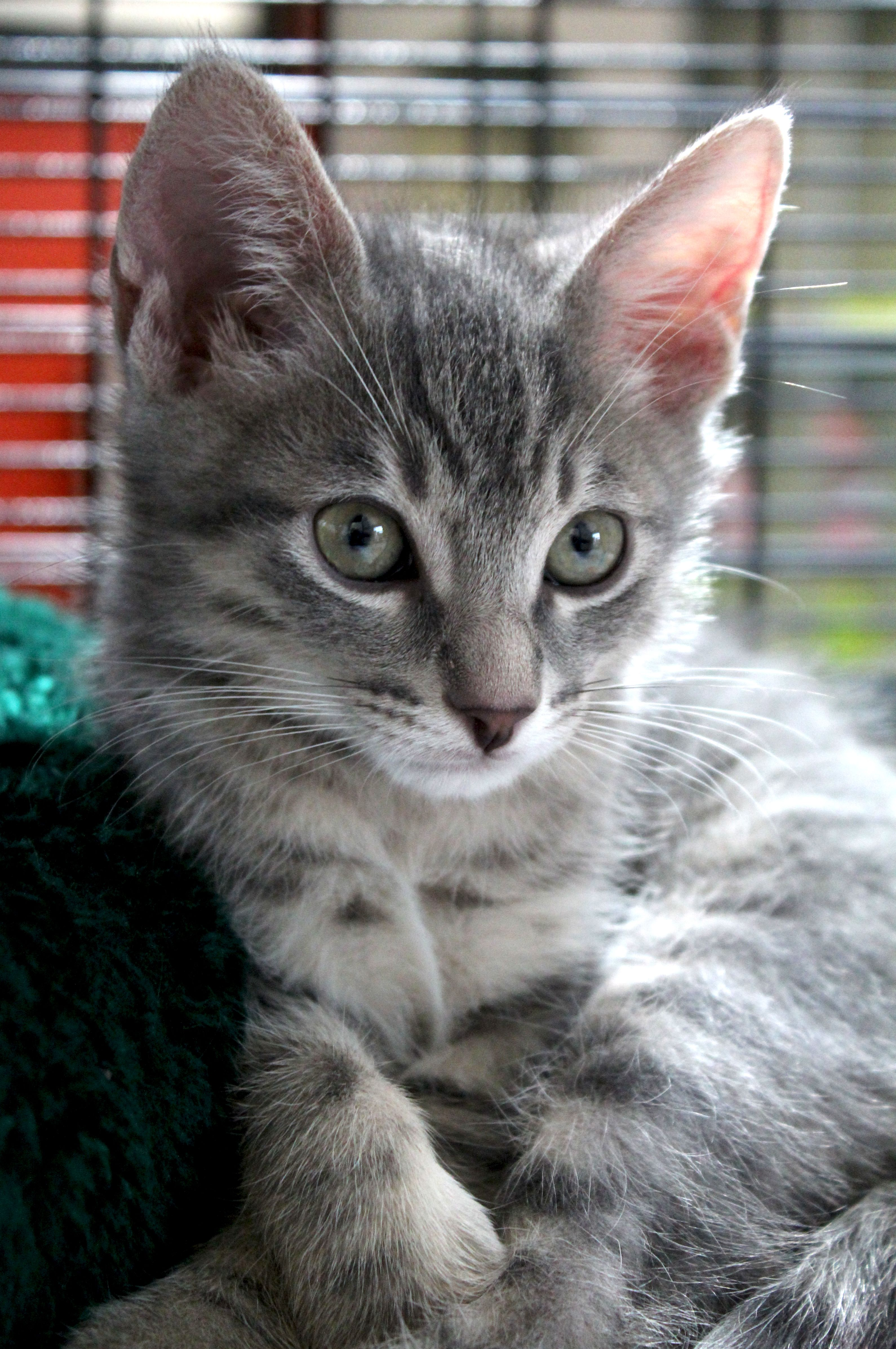 """I m pretty sure my name is """"Oh you re adorable"""" because people"""