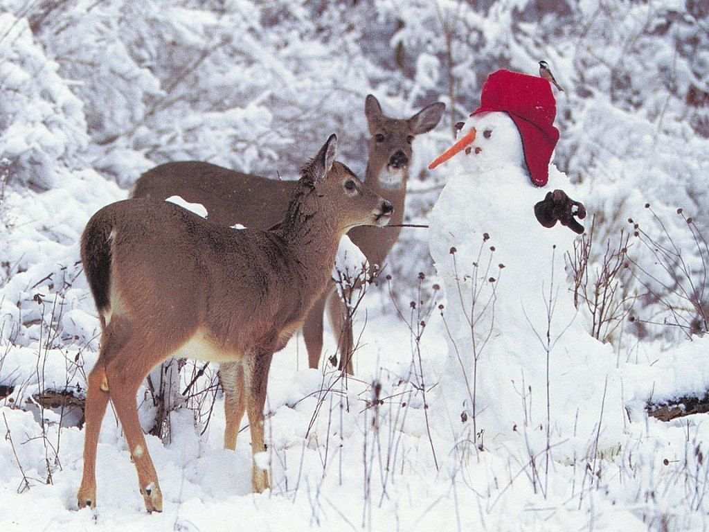 The Deer Look A Little Confused And Don T Know What To Make Of This Snowman Snow Scenes Fawn Wallpaper Winter Wonderland