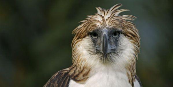 Save the Philippine Eagle