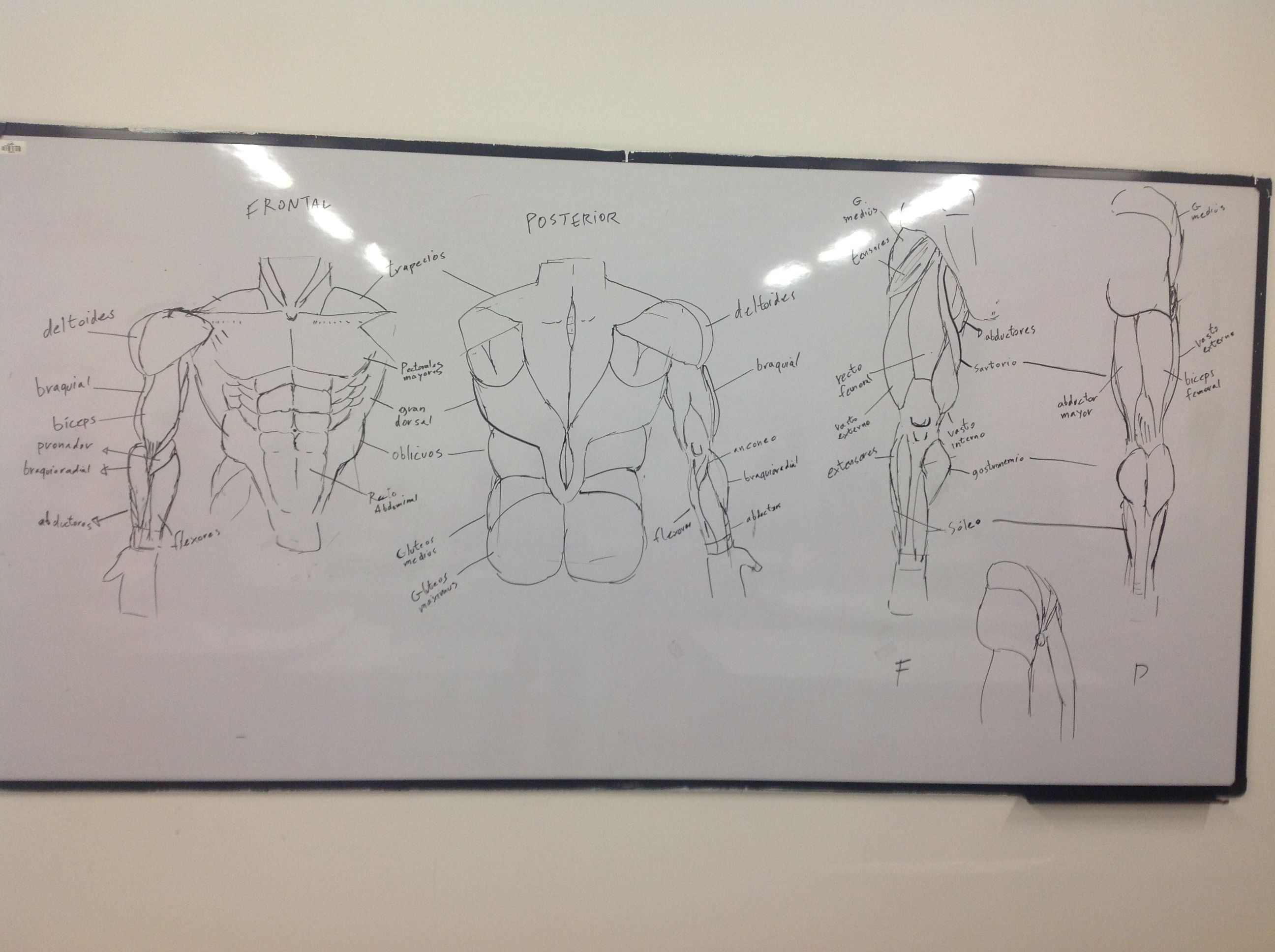 Clases de anatomia, para hacer escultura.